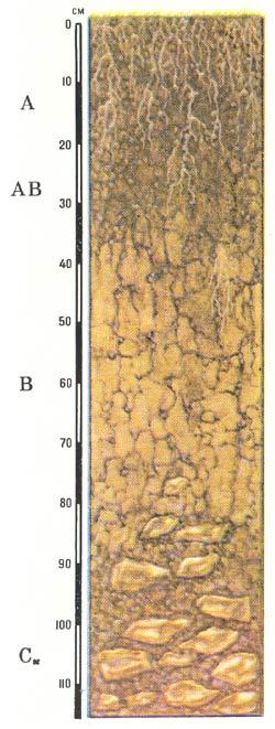 Профиль черноземов выщелоченных умеренных, длительно промерзающих