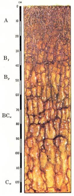 Профиль каштановых почв