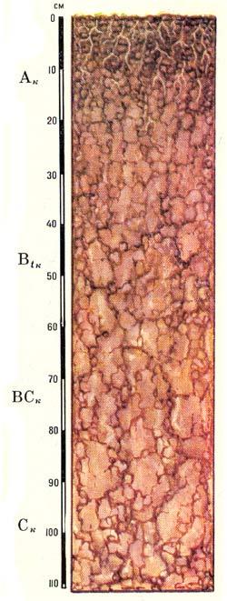 Профиль серо-коричневых обыкновенных почв
