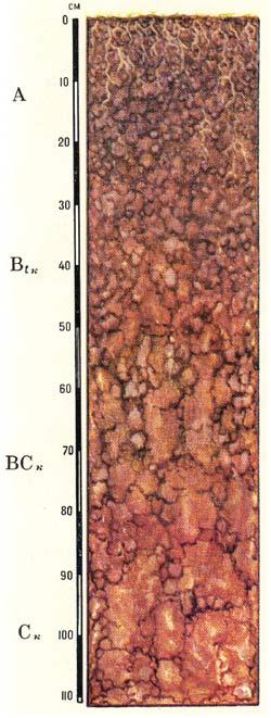 Профиль коричневых типичных почв