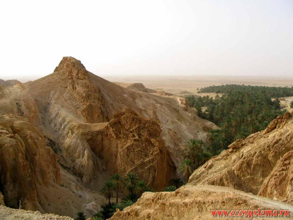 фото природа туниса