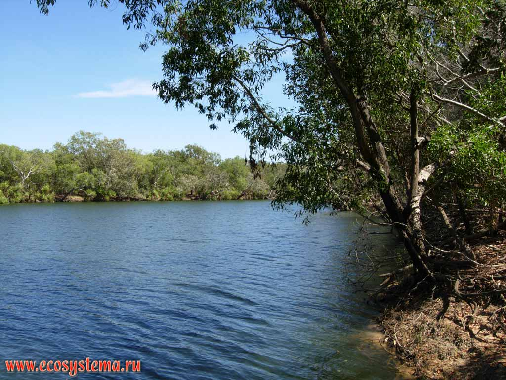Заросший лесом берег реки аделаида