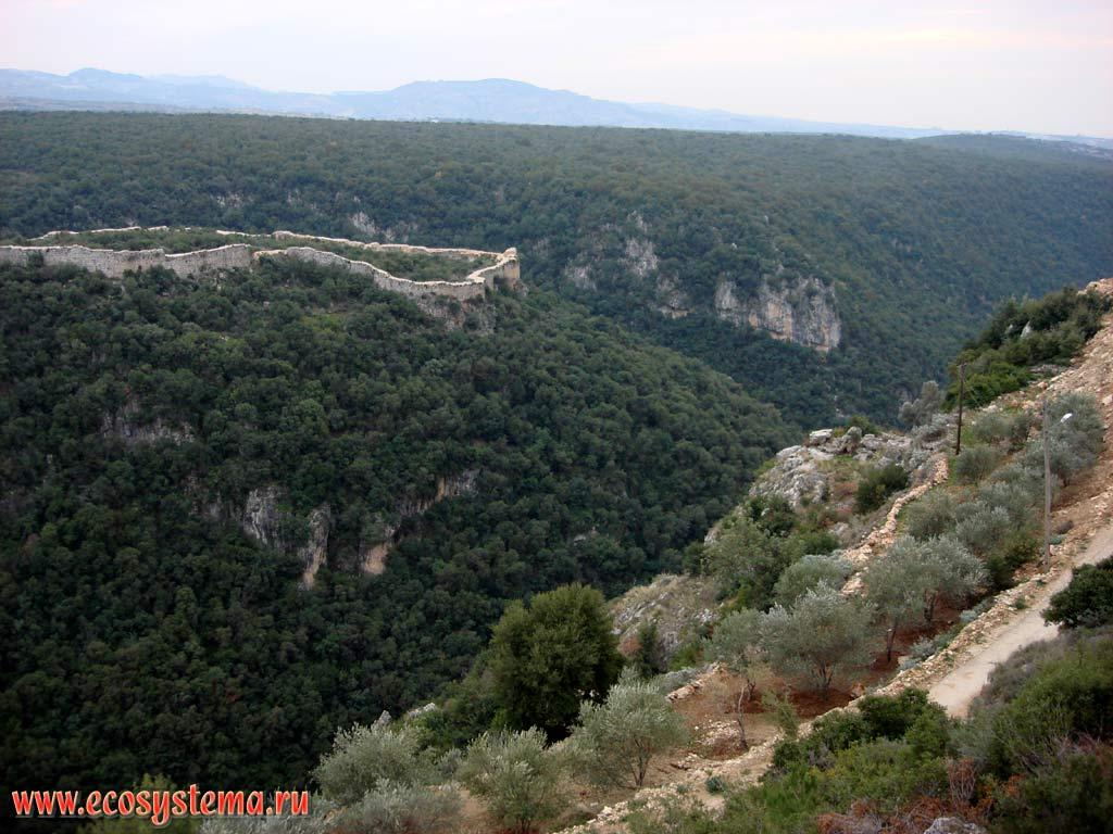 Замок салах ад дин на скале поросшей