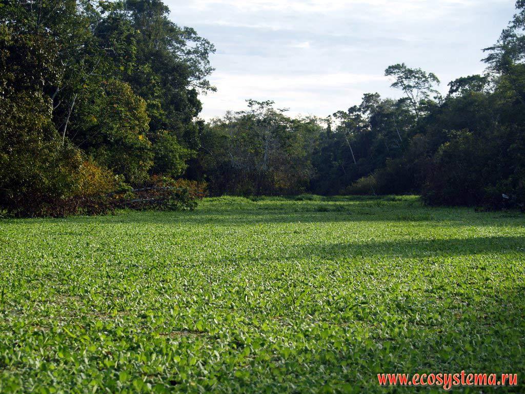 natural vegetation of the world pdf