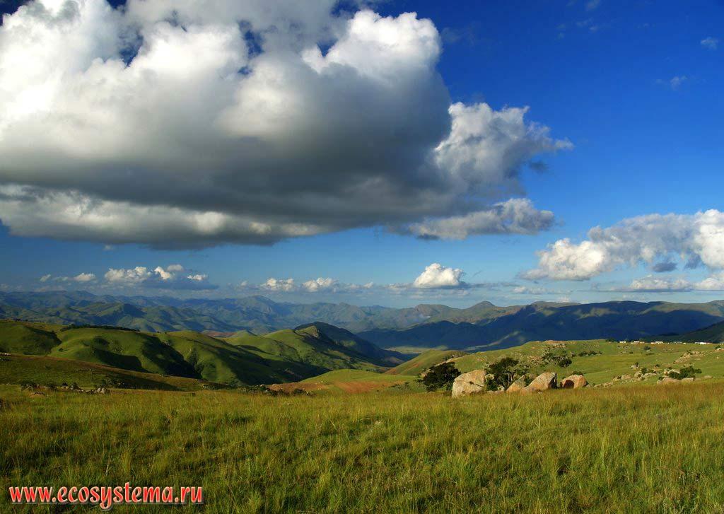 Субтропические высокотравные степи («велд», или «вельд») на восточных склонах Драконовых гор после сезона дождей (лето южного полушария). Южно-Африканское плоскогорье, Свазиленд