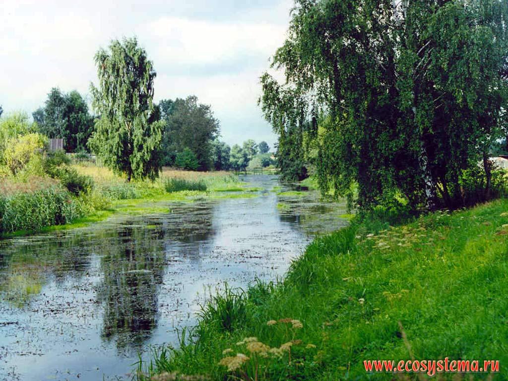 Лето природа фото журнал bigoutlook ru