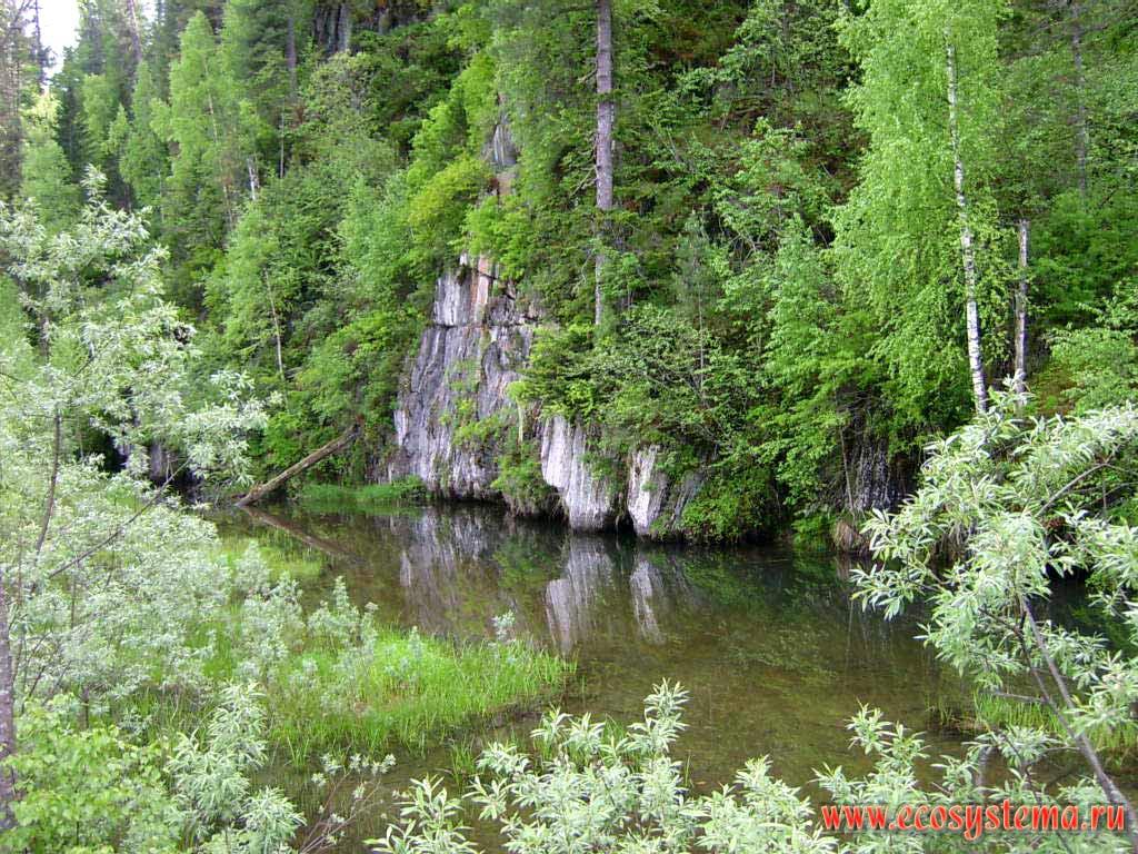 Смешанный лес и ивняк на берегу лесной