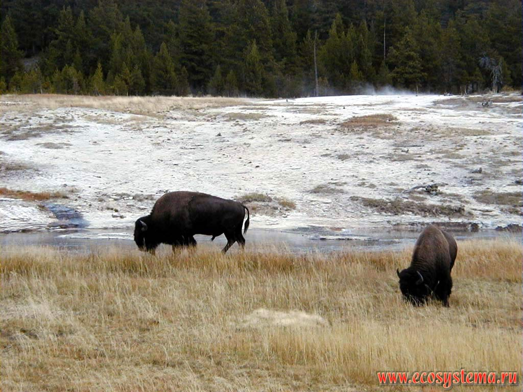 Природные ландшафты и природа Йеллоустонского национального парка ...