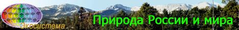 Природа России и мира: фотографии,   описания растений и животных