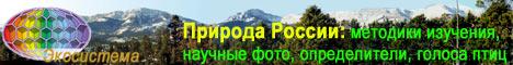 Природа России: методики изучения, научные фото, определители, голоса птиц, рефераты