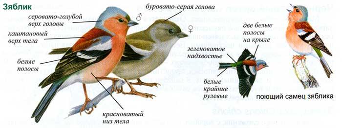 Образец детального изображения вида